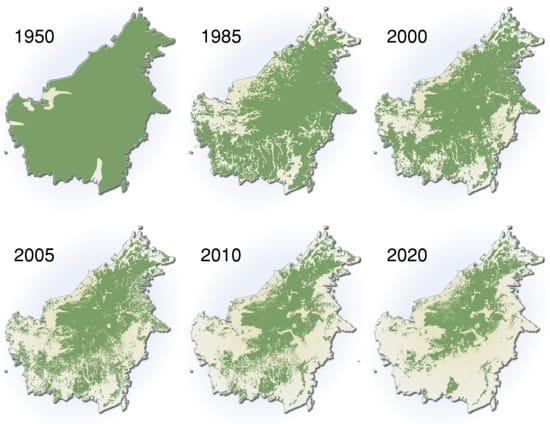destrukce, pralesy, kácení