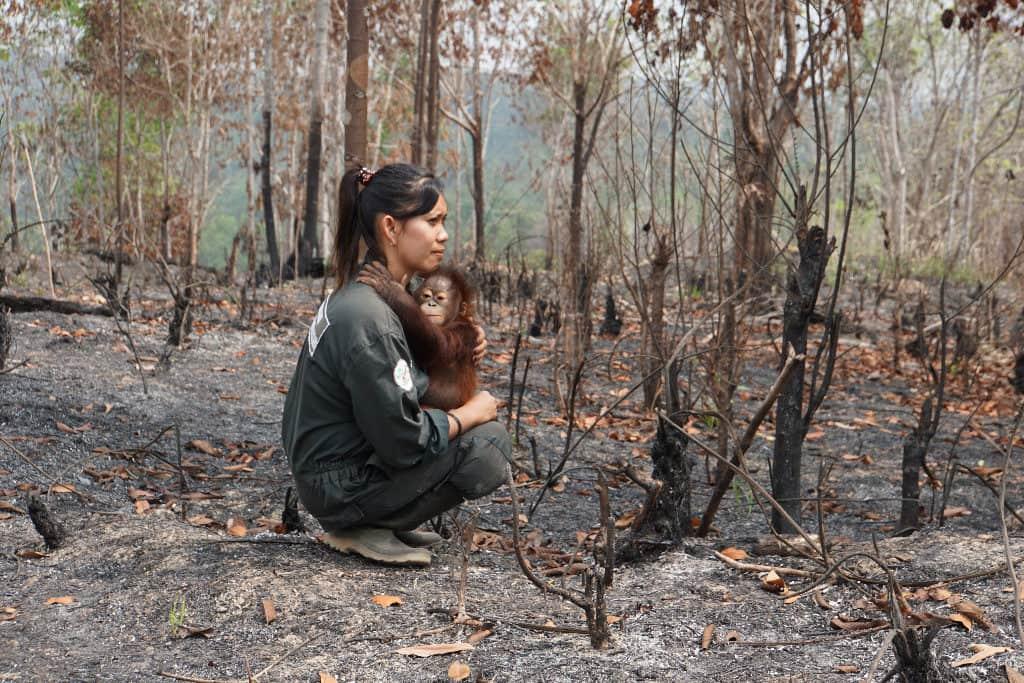 požáry, zvířata, záchrana